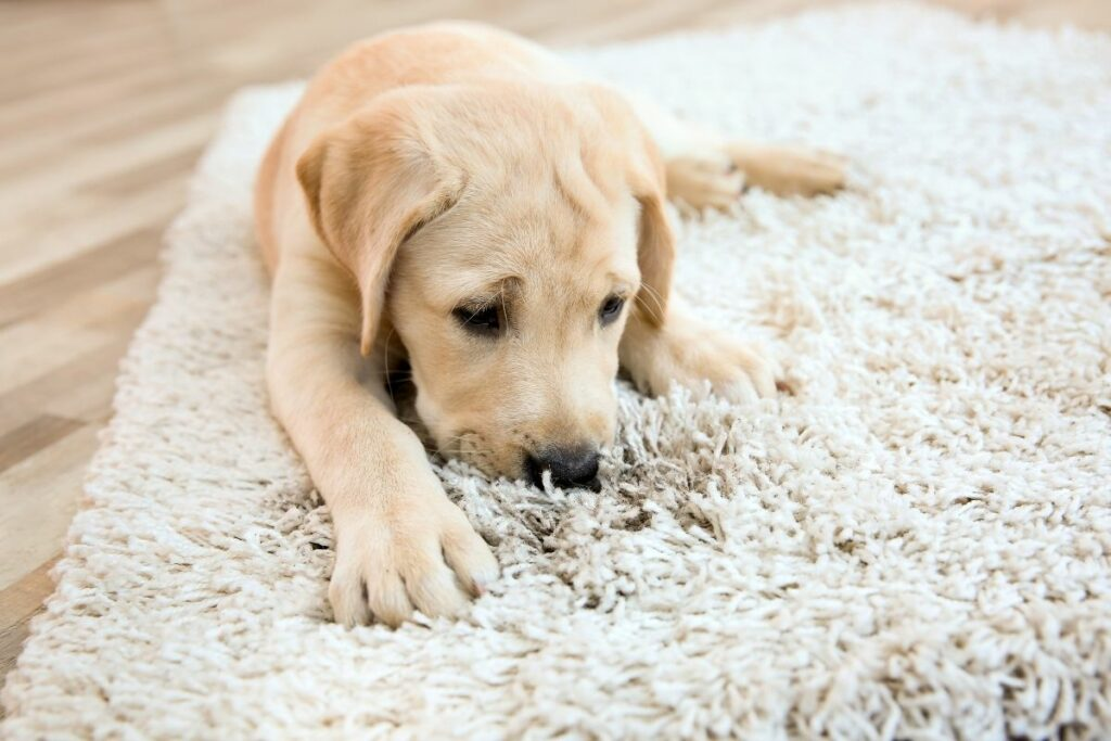 How Can You Clean Your Rugs at Home