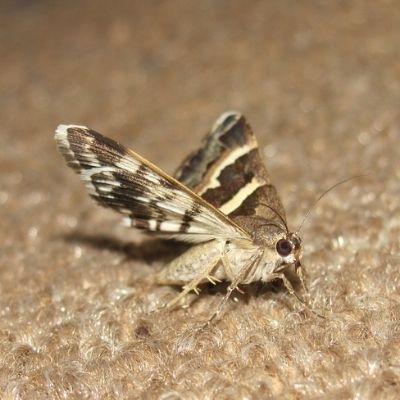 How Do You Get Rid of Moth?