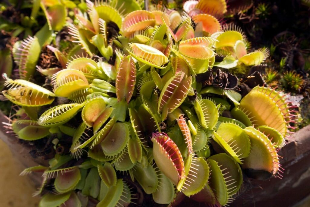 How to Take Care of Carnivorous Plants