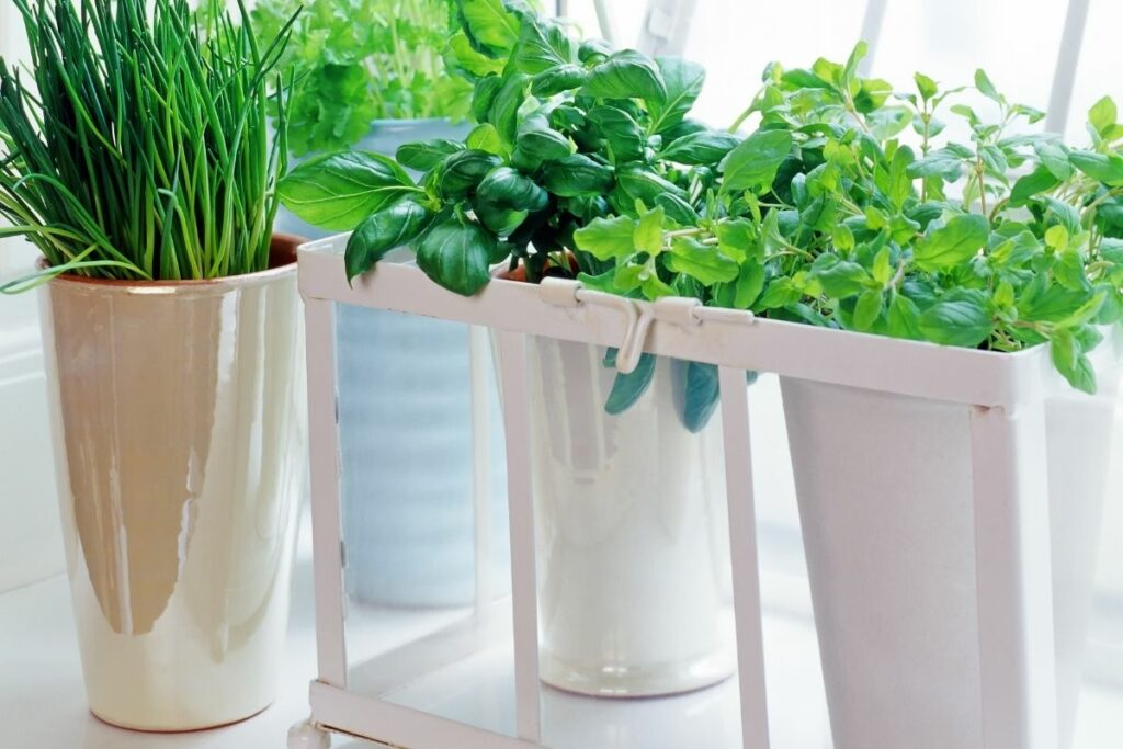 How to Take Care of Herbs