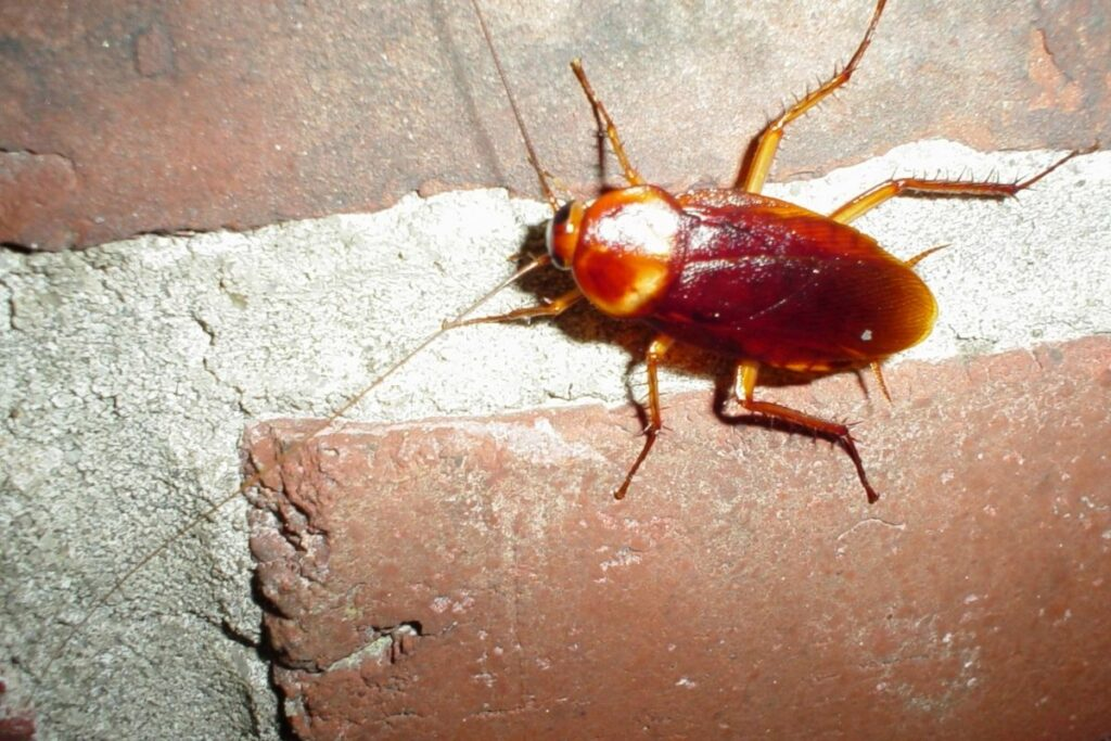 How to Get Rid of Baby Roaches