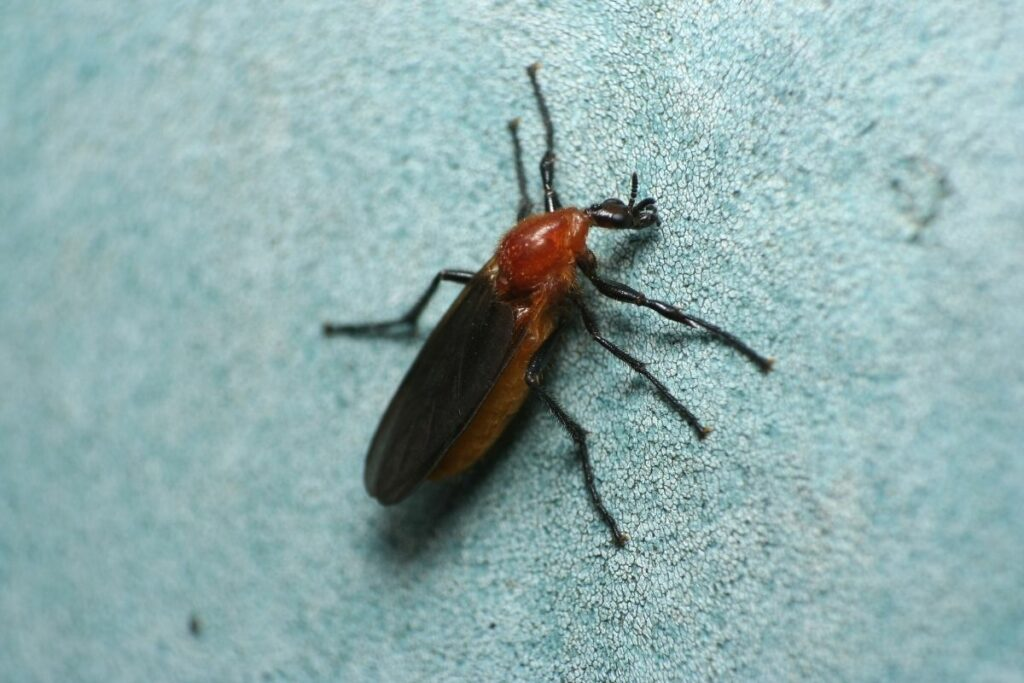 How to Get Rid of Love Bugs?