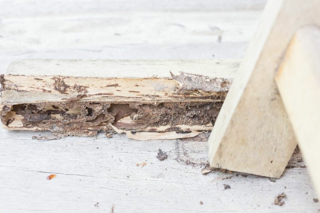 Termite droppings but no termites
