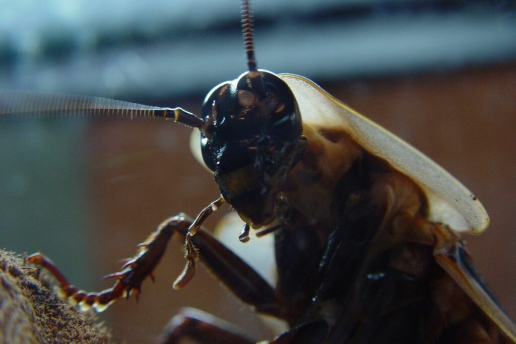 What Does A Roach Nest Look Like and How to Get Rid Of Them